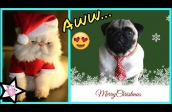 Dogs And Cats Who Are Ready For Christmas Video