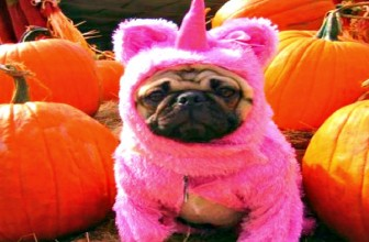 DOGS HATE HALLOWEEN COLLECTION
