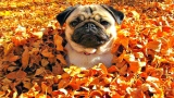 DOGS LOVE LEAVES COLLECTION