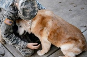 Dogs Meet Their Owners After A Long Time