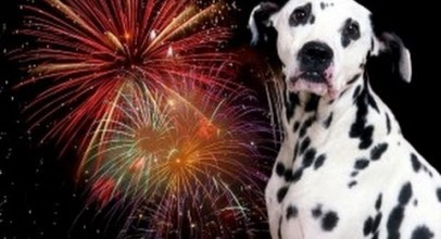 Dogs VS Fireworks – Fourth Of July Compilation