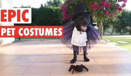 Epic Halloween Pet Costumes | Tricks or Treats?!