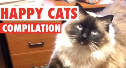 Extremely Happy Cats Pet Video Compilation 2016