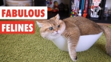 Fabulous Felines | Funny Cat Video Compilation 2017