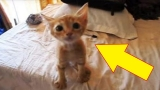 Famished Little Kitten Has The Most Incredible Reaction To This Plate Of Food