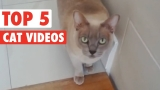 Fantastic Cats Of The Week Video Compilation 2016