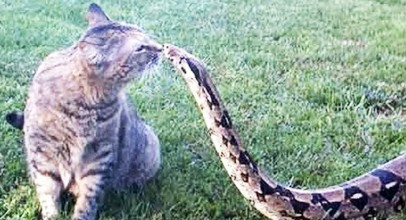 FEARLESS CATS ? 23 Badass Cats Who Will Amaze You
