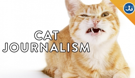 Find Out Why Your Cat is Being Crazy!