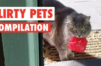 Flirty Pets Video Compilation 2016
