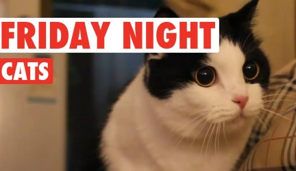 Friday Night Cats Video Compilation 2016