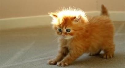 Frisky Kittens Video