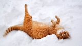 Funniest Cats in the Snow Compilation (2017)
