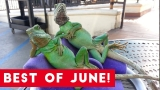 Funniest Pet Reactions & Bloopers of June 2017