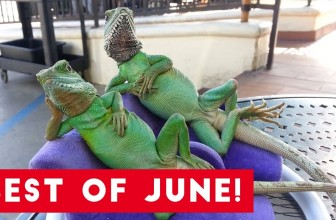 Funniest Pet Reactions & Bloopers of June 2017