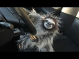 Funny and Cute Sloth Videos Compilation