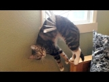 Funny Animal Compilation