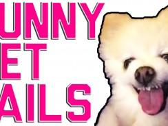 Funny Animal Fails | 2016 Animal Compilation from FailArmy FailArmy  FailArmy