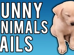Funny Animal Fails January 2017 | A Fail Compilation by FailUnited