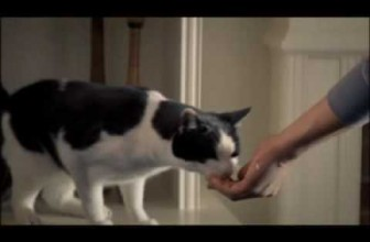 Funny Cat Commercial – TEMPTATIONS Cat Treats