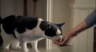 Funny Cat Commercial – TEMPTATIONS Cat Treats