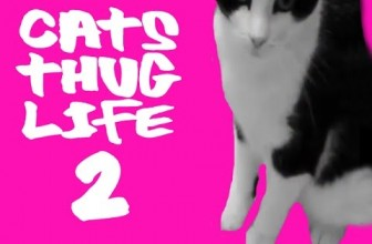Funny Cat Thug Life pt.2 – NEW Ultimate Cats Thug Life Compilation!