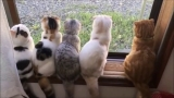 FUNNY CATS 2017