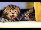 Funny Cats and Cute Kittens