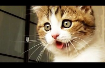 Funny Cats and Cute Kittens Compilation June 2016