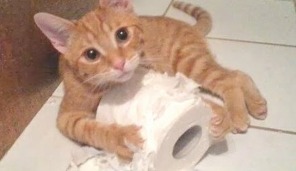 Funny Cats And Dogs Vs Toilet Paper Compilation