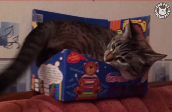 Funny cats in boxes compilation