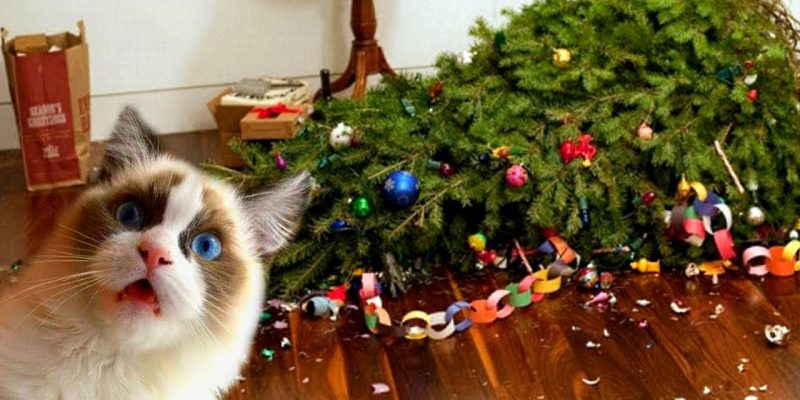 Funny Cats Love Christmas Trees Video