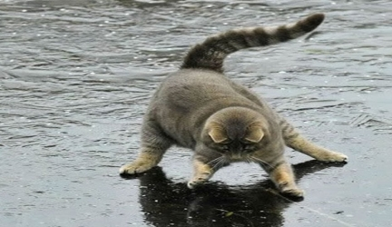 Funny Cats on ICE Compilation