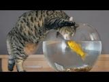 Funny cats vs fish tanks – Cute cat compilation