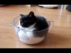 Funny Cats vs Small Spaces Compilation 2016