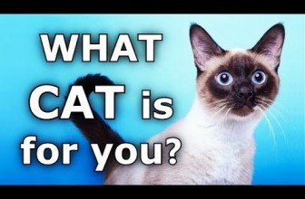 ✔ Funny Cats: What Cat Breed is Best For You?