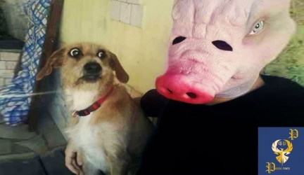 Funny Dogs Scared of Masks – Part 2 Video