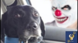 Funny Dogs Scared of Masks – Part 1 Video
