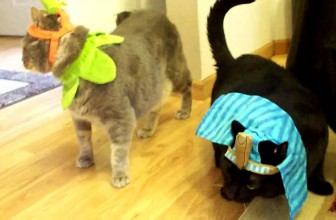 FUNNY MEOWING CATS DRESSED UP IN HALLOWEEN PET COSTUME
