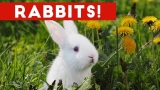 Funny Rabbit Videos Weekly Compilation 2017