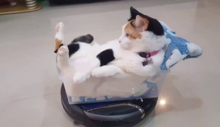 Funny Roomba Cat Video