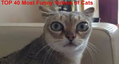 Funny Videos of Cats Compilation 2016-2017