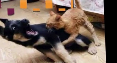 Funny Videos That Will Make You Laugh So Hard You Cry