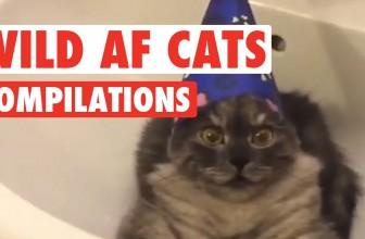 Funny Wild AF Cat Pet Video Compilation 2016