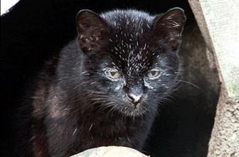 GEOFFROY CAT Species Spotlight