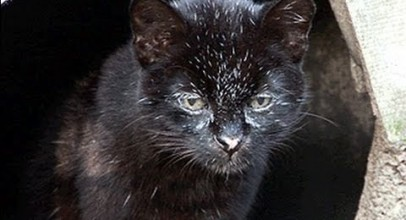 GEOFFROY CAT Species Spotlight
