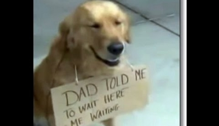 Golden Retriever Sits Outside Store Waiting For Owner…Patiently