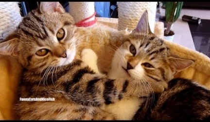 Happy Valentine's Day ! Top 20 Kitten and Cat Hugs Video