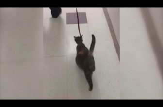 Heavily Pregnant Stray Cat Wanders Into Shelter Ready to Give Birth