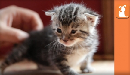 Helpless 8 Day Old Kitten Finds Forever Home, You Won't Believe What She Looks Like Now!