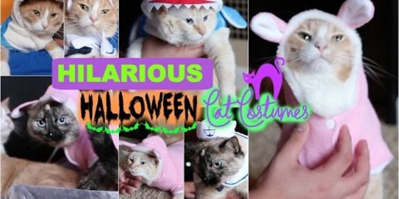 HILARIOUS HALLOWEEN COSTUMES FOR CATS